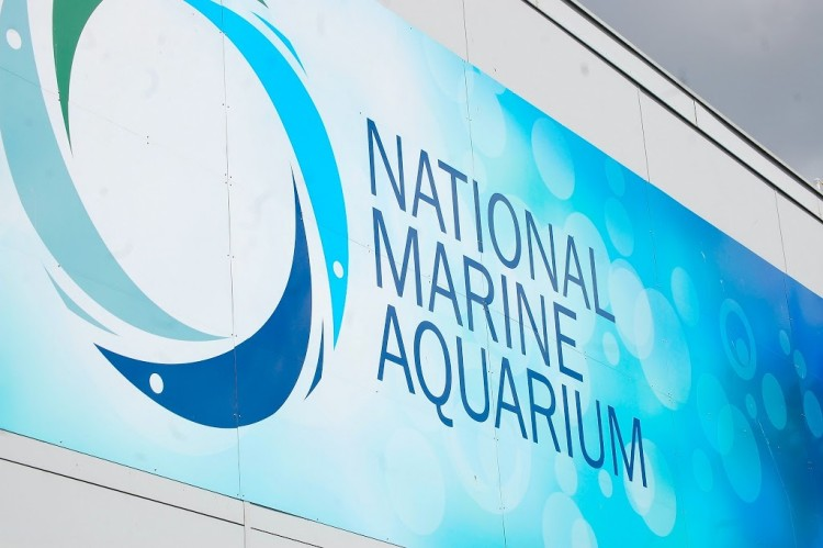 Discovering the Deep – a day out at the National Marine Aquarium