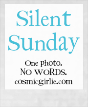 Silent Sunday 08/06/2014