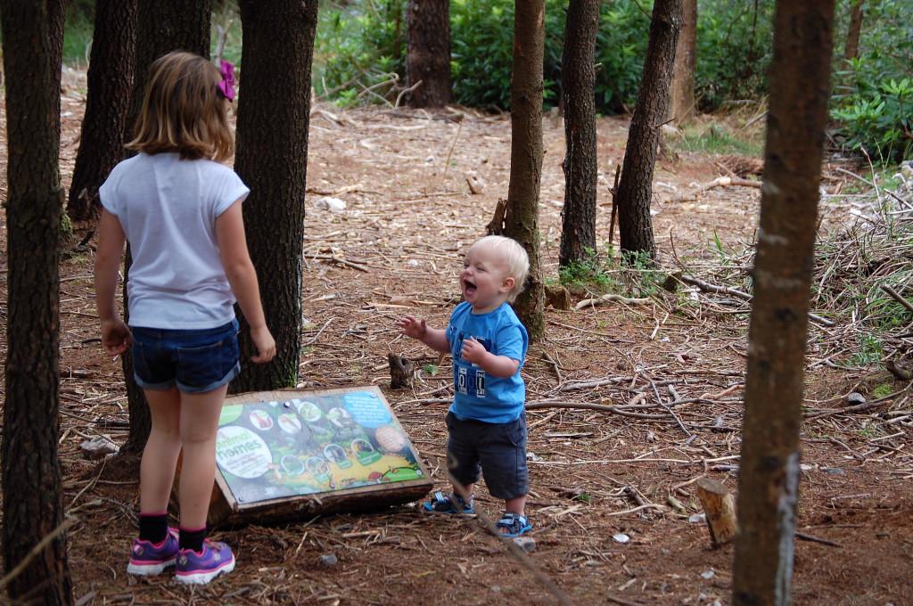Haldon Forest Gruffalo Trail