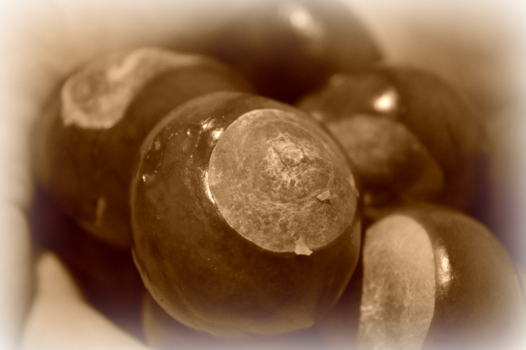 Conkers, silent sunday