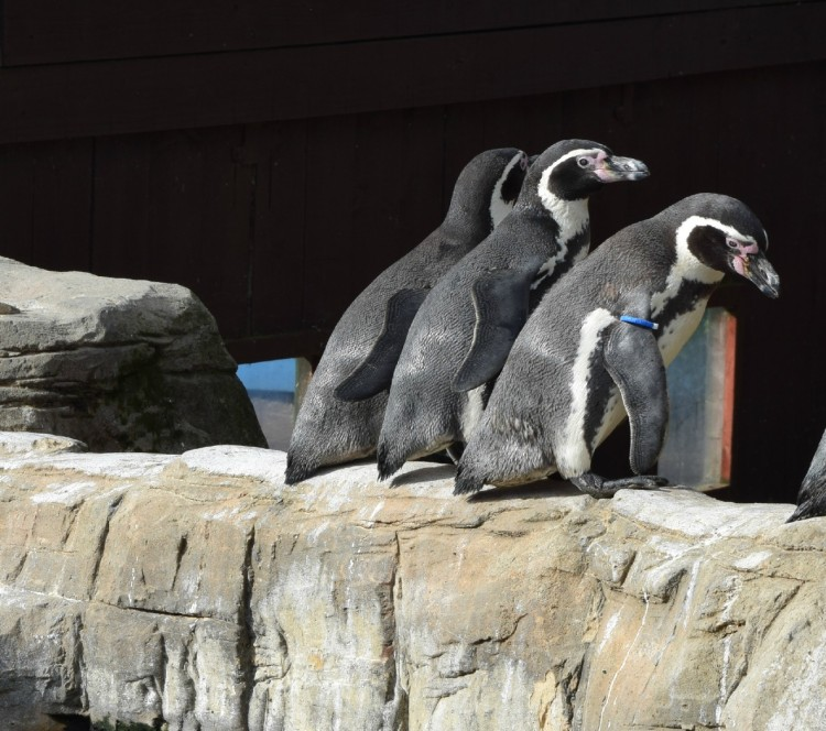Review: Sea Life Centre, Weymouth