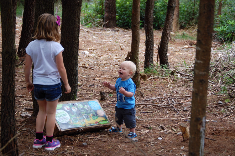 How to teach children about ecology