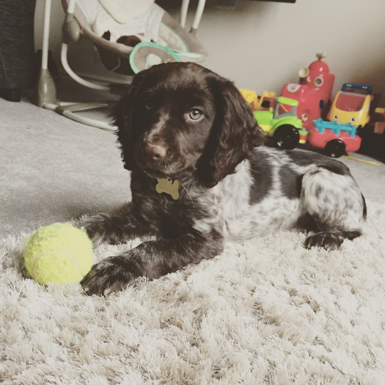 Preparing your home for a new puppy