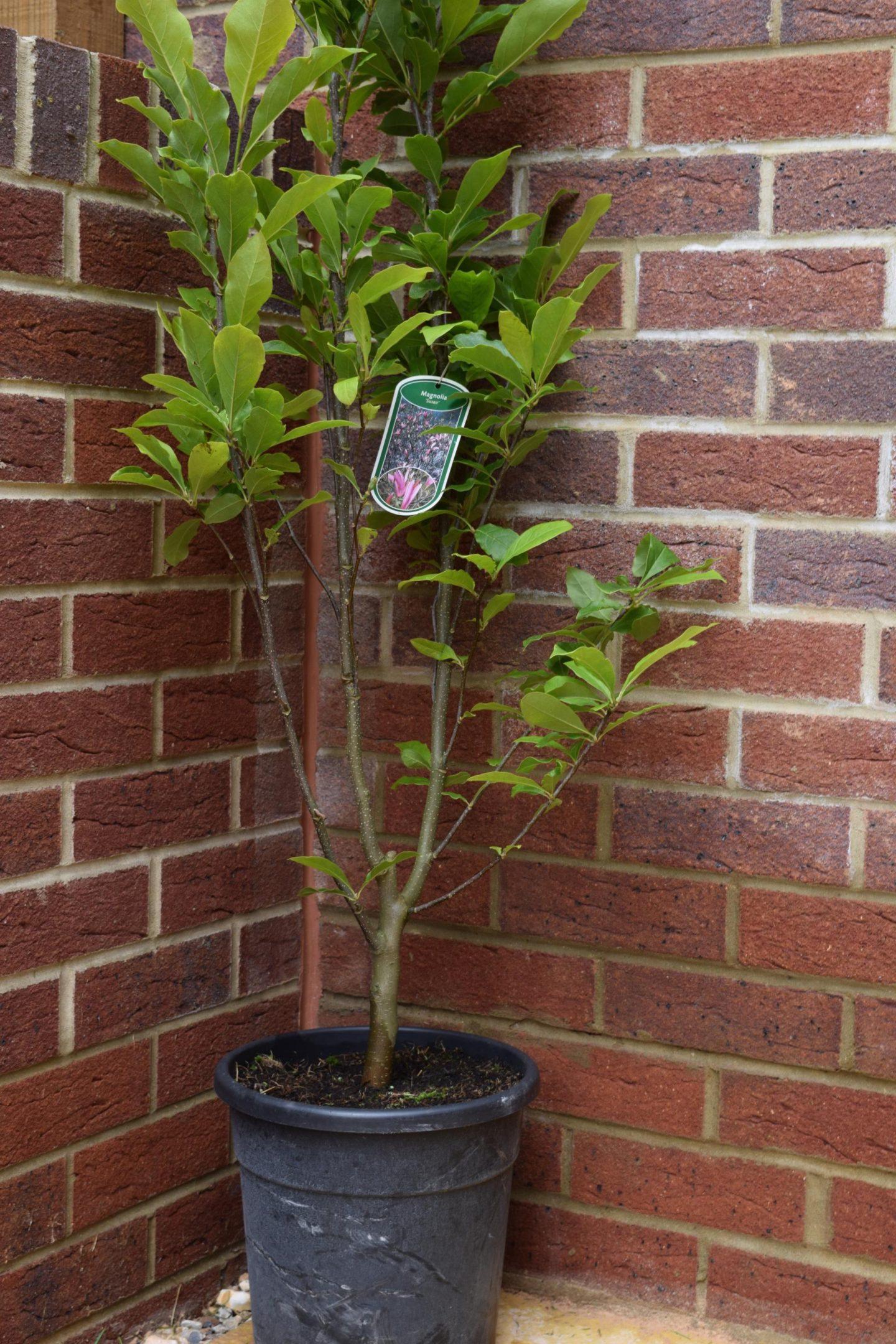 Tree2MyDoor