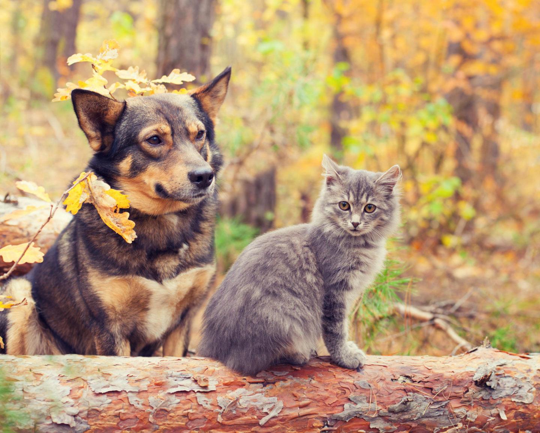 Giveaway | Win a Bob Martin dog walking bundle