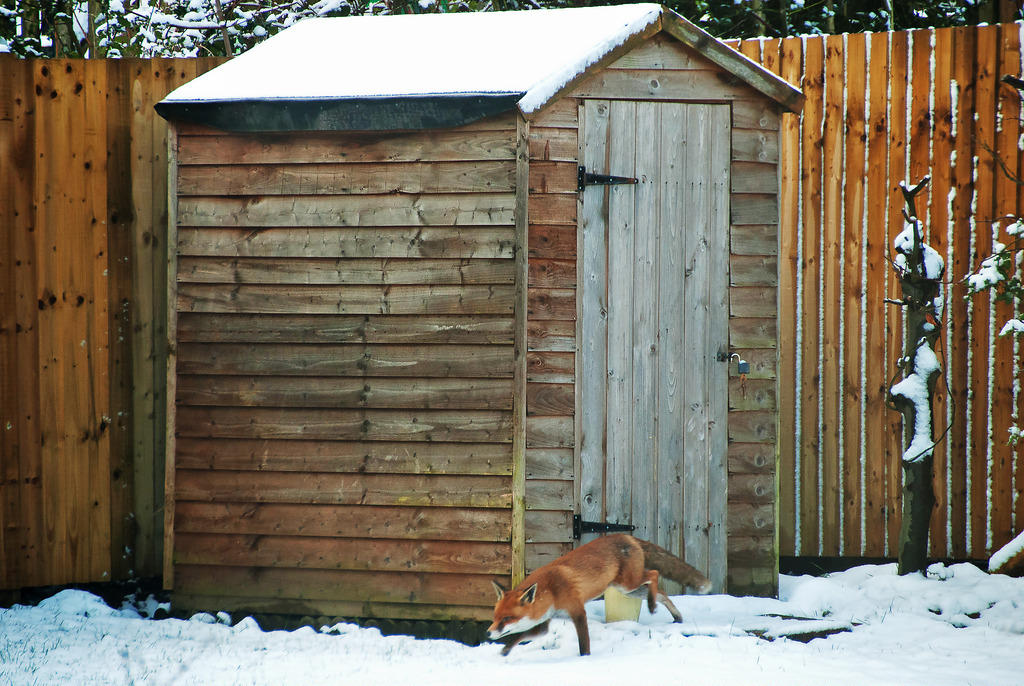 Garden shed maintenance tips for winter