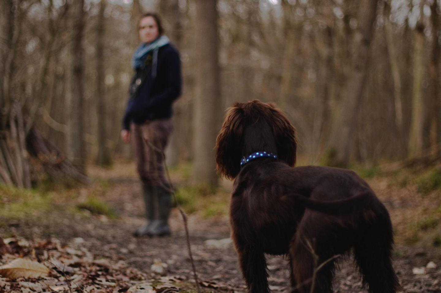 How having a dog can keep you and your family fit and healthy