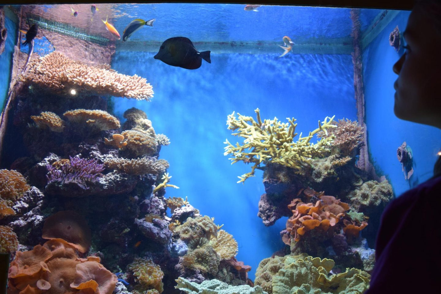 Review | National Marine Aquarium, Plymouth