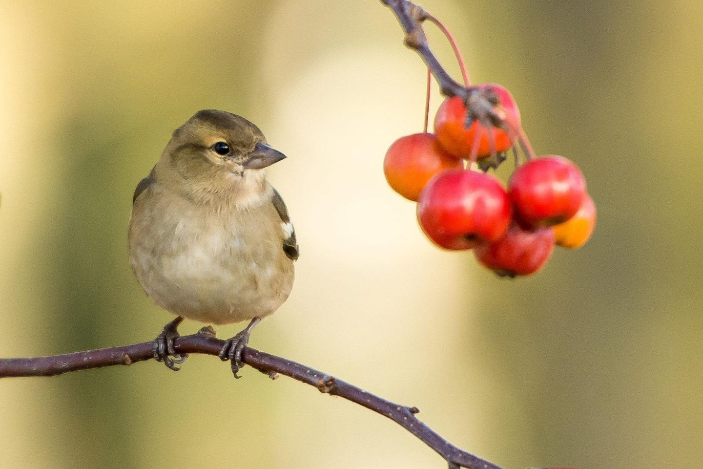 Tips for welcoming animals and birds into your garden