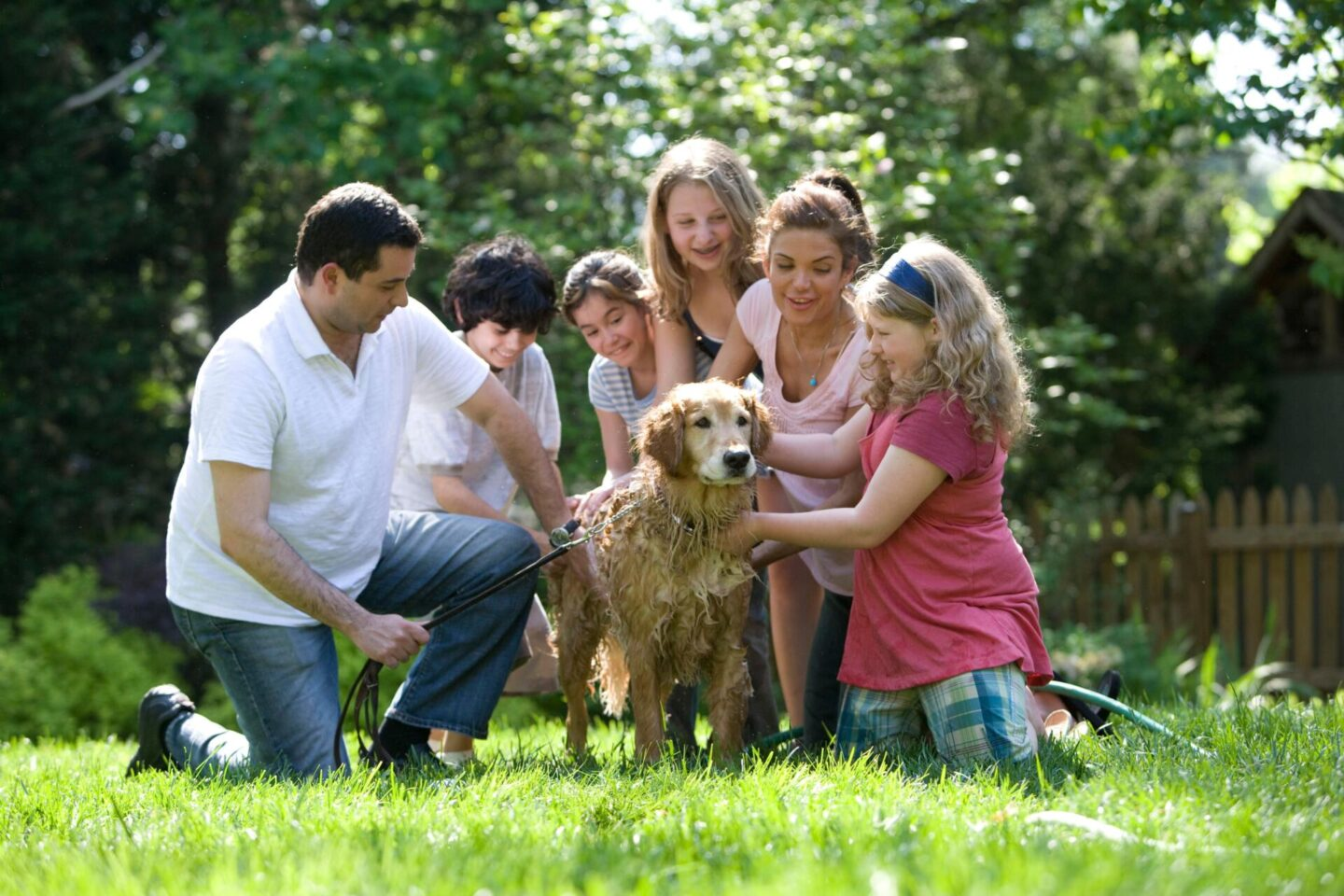 7 essential tips for picking out a new family dog