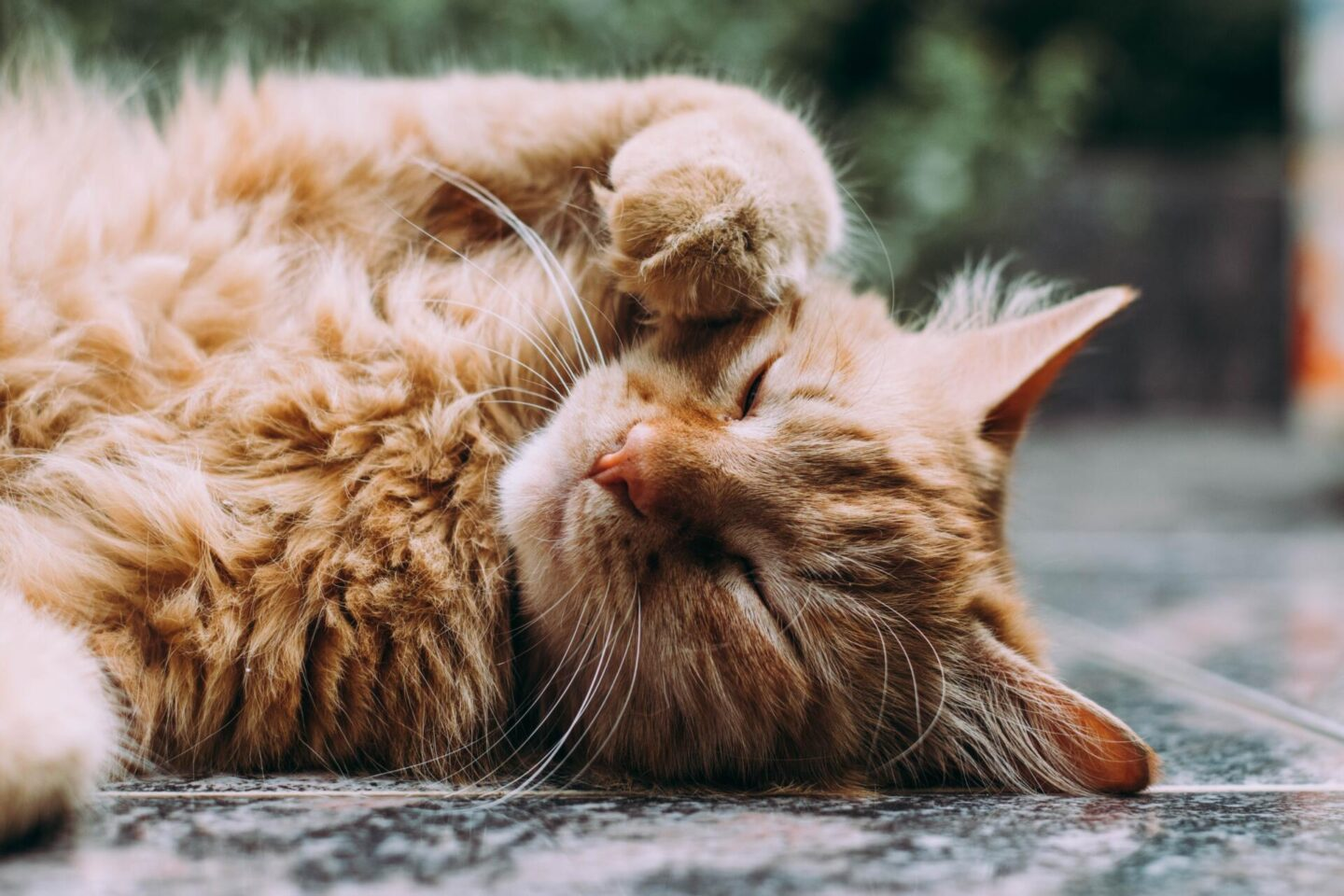 4 cat care tips for new owners